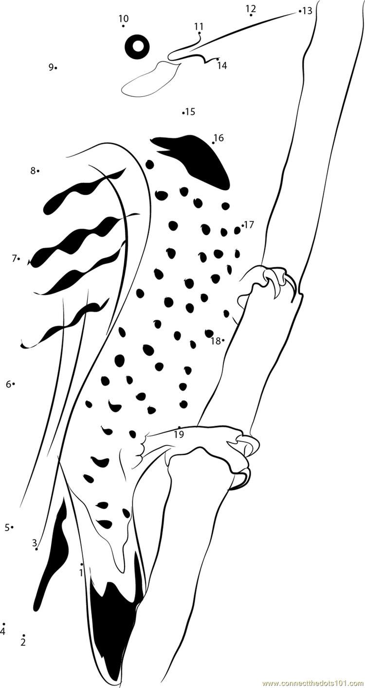 41++ Cartoon polar bear coloring pages ideas in 2021