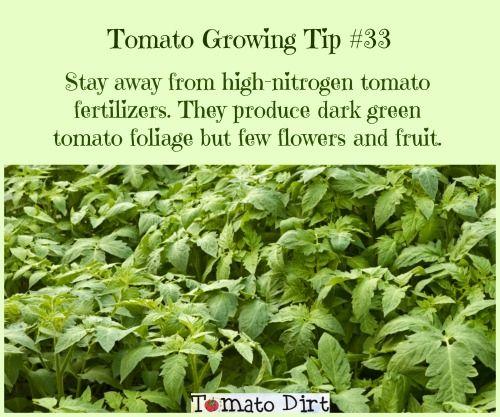 Use Tomato Fertilizer Throughout The Season For Best 640 x 480