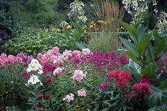 schattenpflanzen pflanzen f r schattige standorte und den schattengarten schatten garten. Black Bedroom Furniture Sets. Home Design Ideas