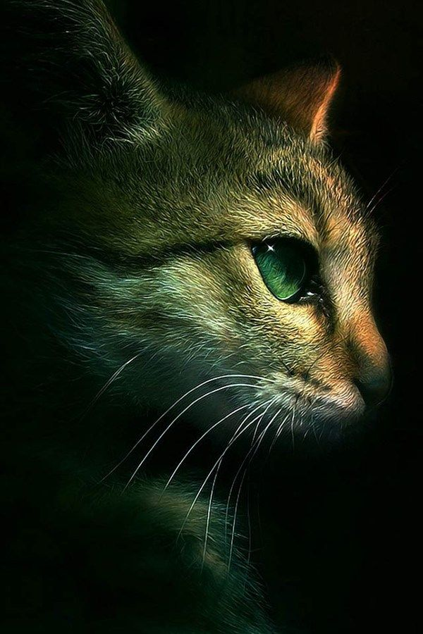 35 Beautiful Iphone 4s Wallpapers Warrior Cats Cats Cat Wallpaper