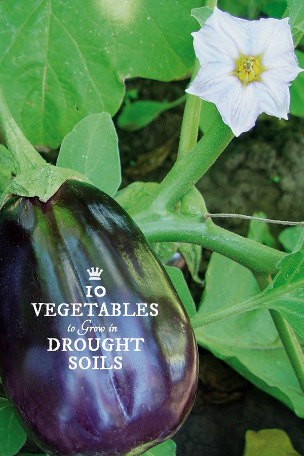 10 Best Vegetables For Drought Soils Gardening Growing 400 x 300