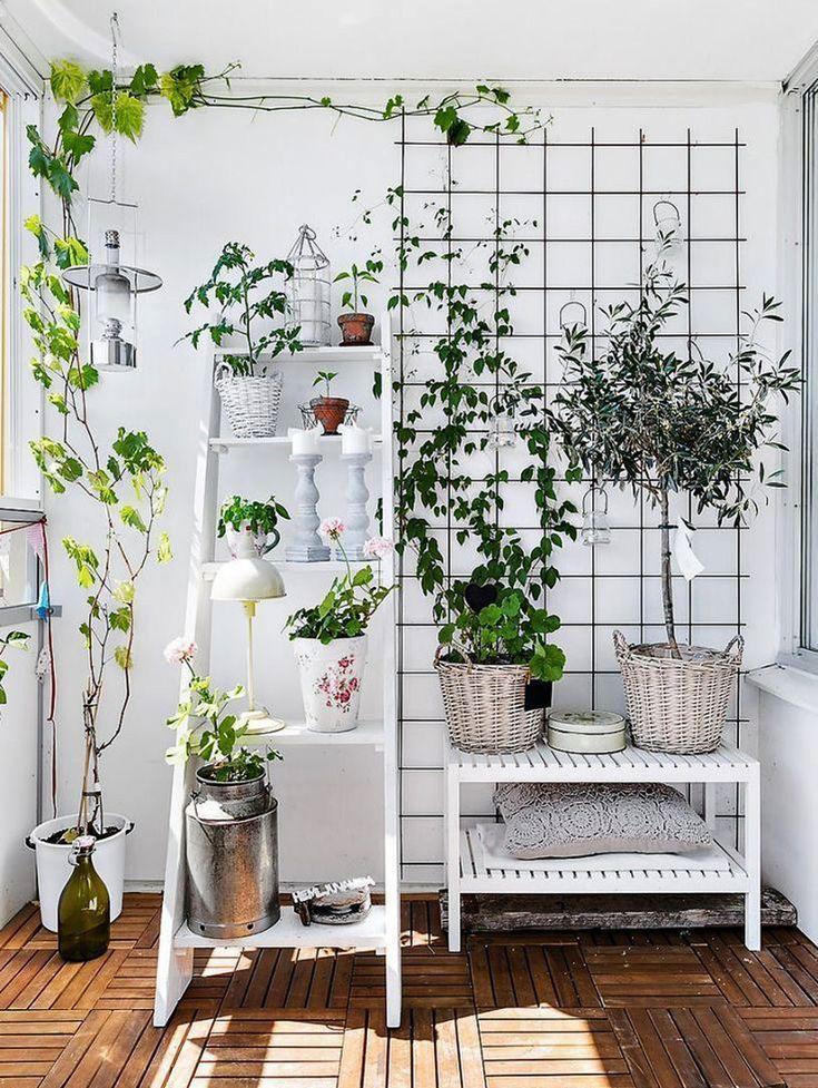 Climbing plants Taner Çulam Diy in 2020 (mit Bildern