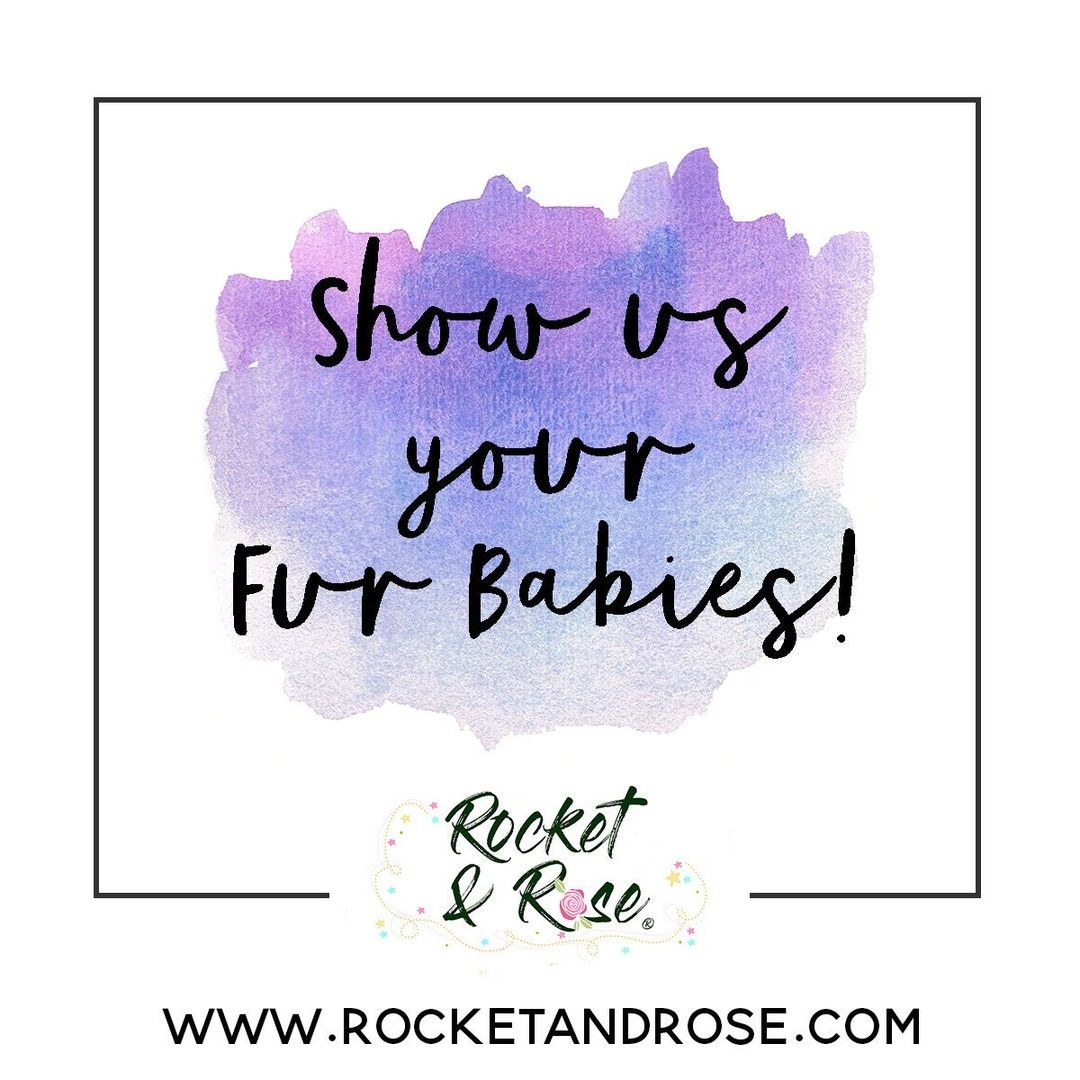 Rocketandrose Posted To Instagram This Weather Is Ridiculous Let S Cheer Ourselves Up With Fur Baby Pics Baby Pictures Fur Babies Instagram