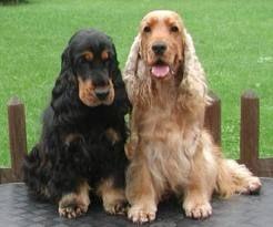 ¿Qué es la displasia de cadera en perros?