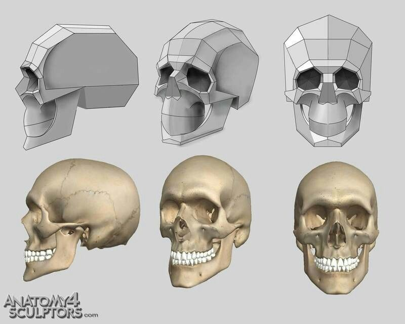 Simplified Planes Of Skull Human Proportion Pinterest Anatomy