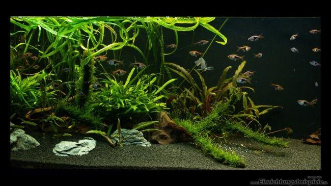 Aquarium Von M G Moka Asienbecken Im Werden Aquarium Einrichten Susswasseraquarium Planted Aquarium