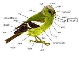 Afbeeldingsresultaat Voor Soorten Vogels Spanje