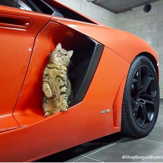 Just Lookin For A Ride Cats Catlover Catstagram Catlady