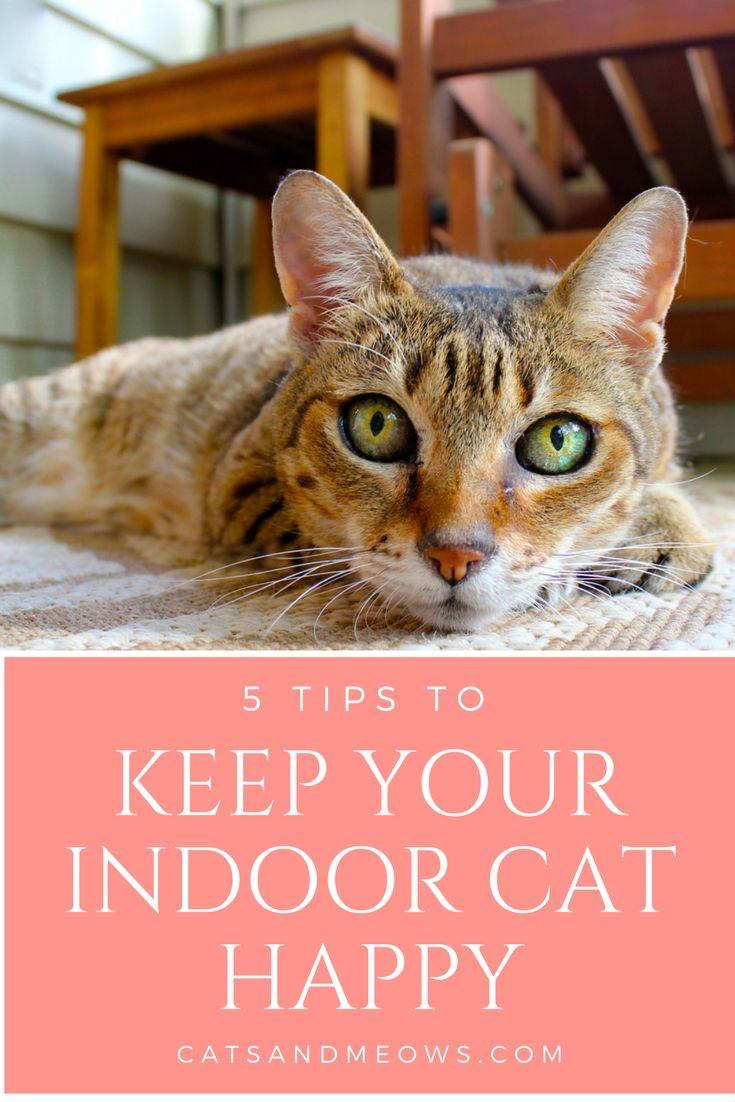 5 Tips To Keep Your Indoor Cat Happy Indoor Cat Cat Training Kitten Care
