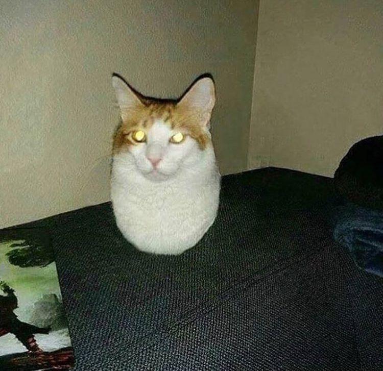 Cats, Funny Cat Photos, Cute Cats