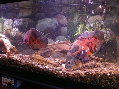 Pin By Teri Mchatton Crawford On Pets Aquarist 1 Gallon Of Water