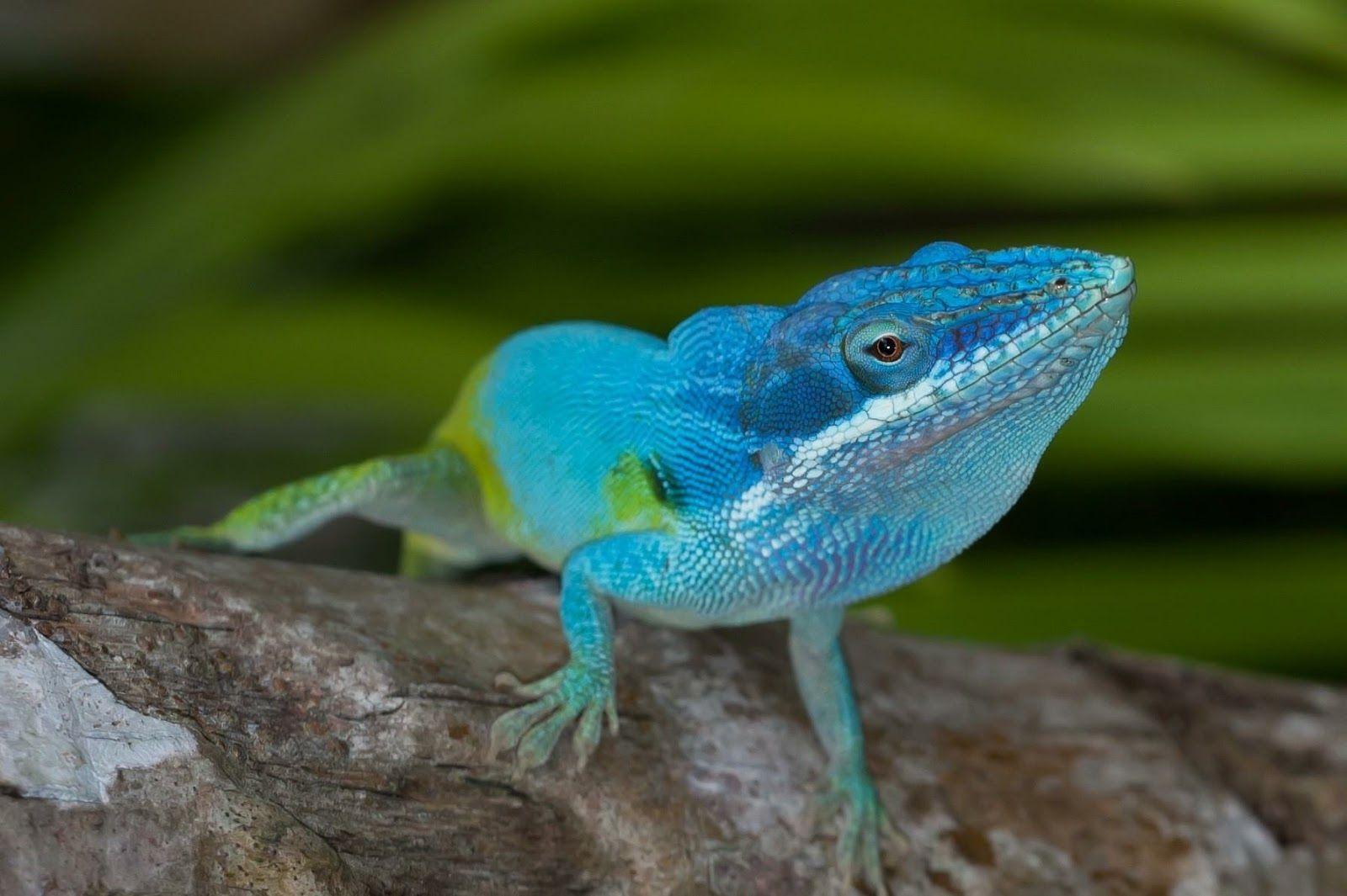 Top 5 de los animales que solo se encuentran en Colombia