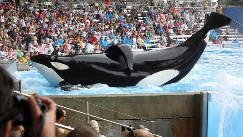 Seaworld's profits plunge 84 per cent due to Blackfish film: http://www.dazeddigital.com/artsandculture/article/25824/1/seaworld-s-profits-plunge-84-because-of-blackfish