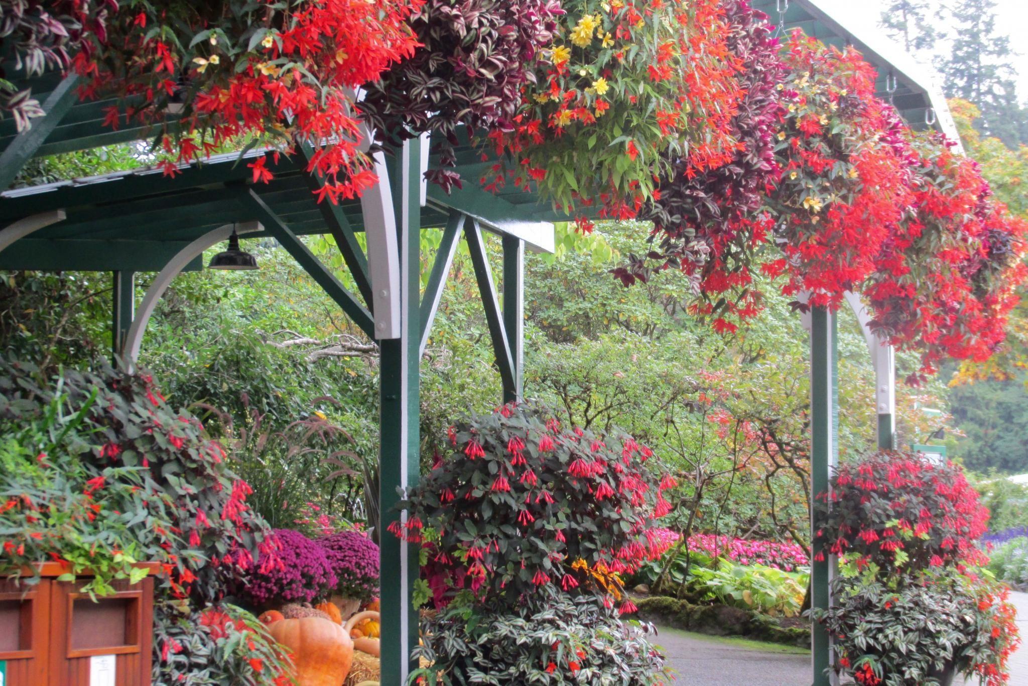 Fall displays at Butchart Gardens #butchartgardens
