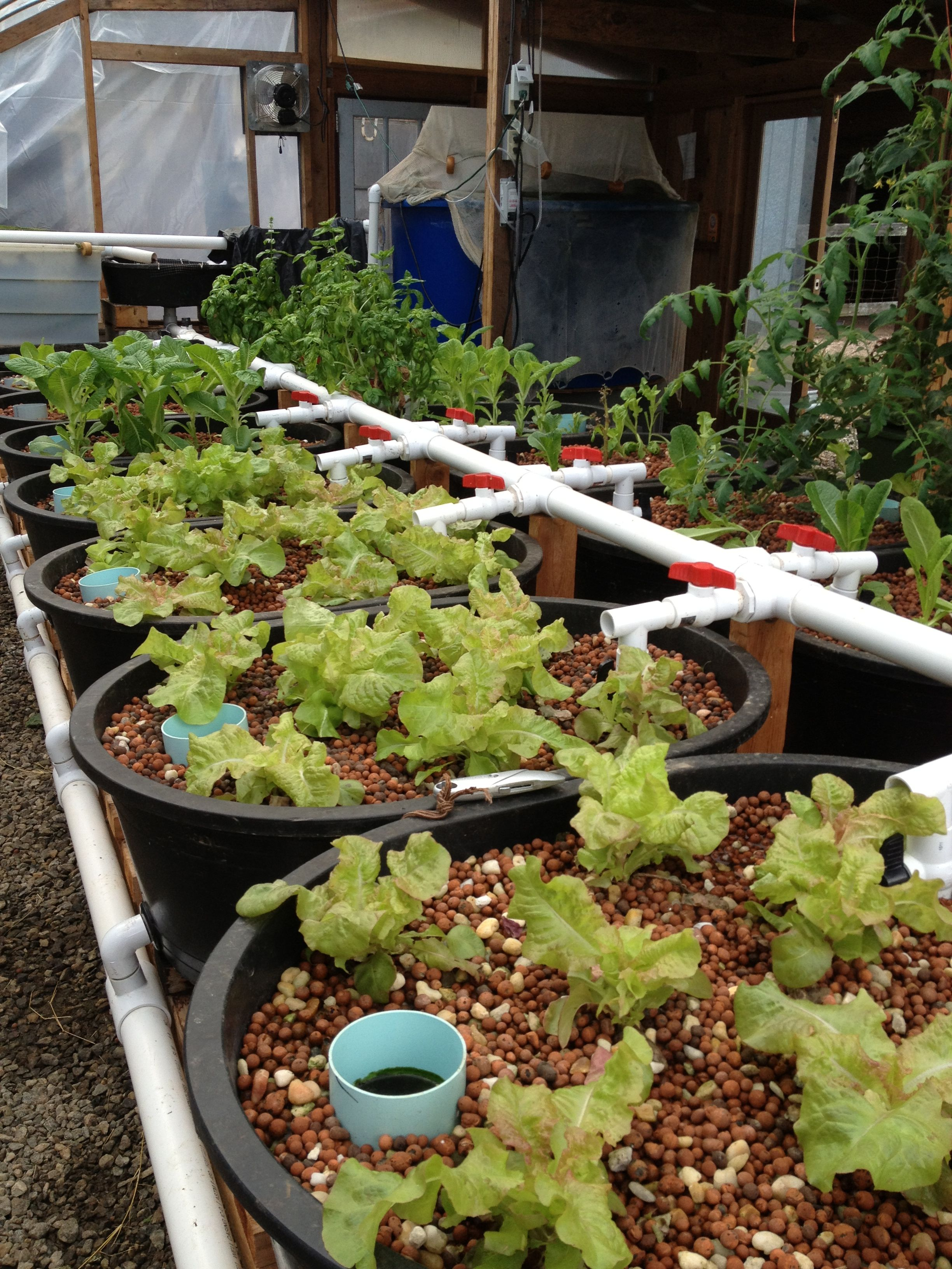 aquaponics system at uga student farm urban garden inspirations
