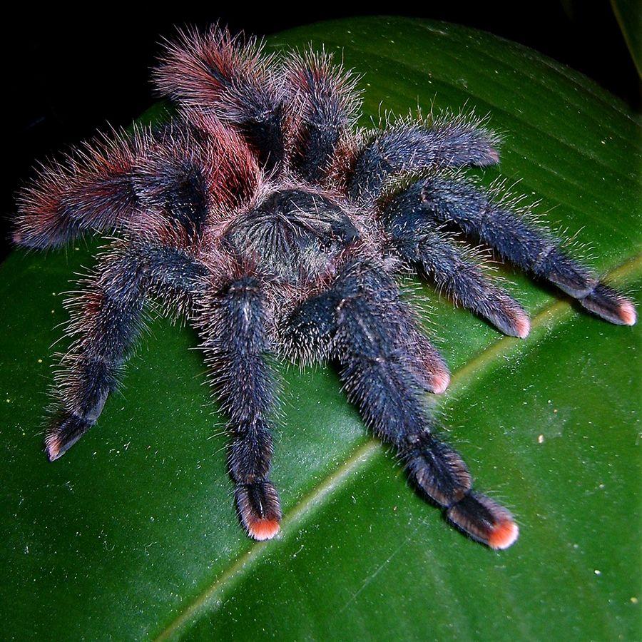 видео картинки самава большова паука широкоформатные