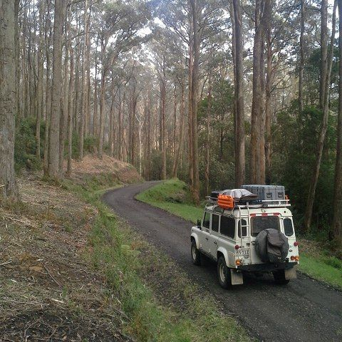 Great trails to drive through the #otwaystateforest along the #greatoceanroad #landrover #landroveraus #onelifeliveit #landroverzen #defender #maxtrax #hemamaps #neverstopexploring #exploremore #getoutdoors #lifeofadventure #lifeontheroad #homeiswhereyouparkit #vanlife #4wdtouring #4x4 #travel #roadtrip #adventuremobile #forest #trees by davidpriddis