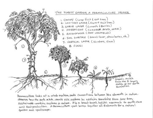 An Illustrated Model Which Articulates How Simple It Is To Use Our Space In A Way That Makes A Lot Of S Permaculture Design Permaculture Gardening Permaculture