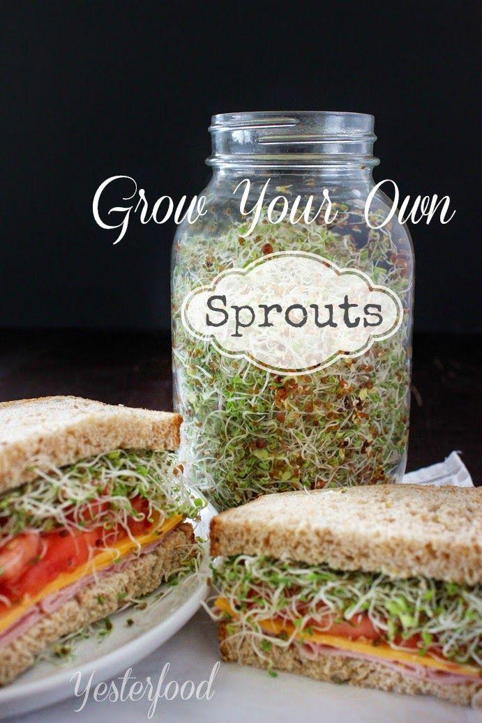 Cultiva tu propio germinado para sándwiches y ensaladas