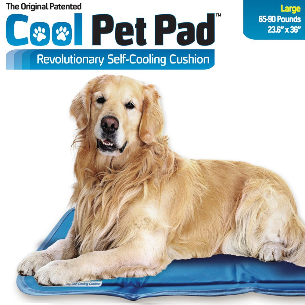 Pin On Keeping Dogs Cool
