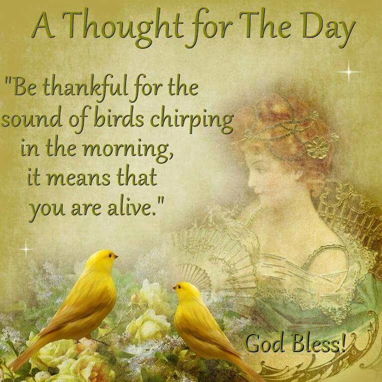 Be thankful for the sounds of birds chirping in the morning