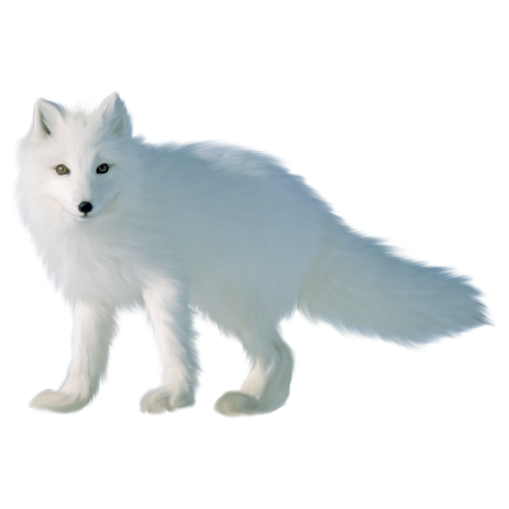 Arctic Fox Png Image With Transparent Background Arctic Fox Png Photo Stock Images Free