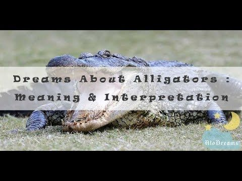 7432a87255 66 Dreams about Alligators - Meaning and Interpretation