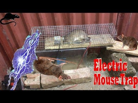 Electric Rat Trap/Best Mouse Trap Using Grille&Pot Plastic/Electric Mouse Trap With Battery 12V. ph8 - YouTube #mousetrap Electric Rat Trap/Best Mouse Trap Using Grille&Pot Plastic/Electric Mouse Trap With Battery 12V. ph8 - YouTube #mousetrap