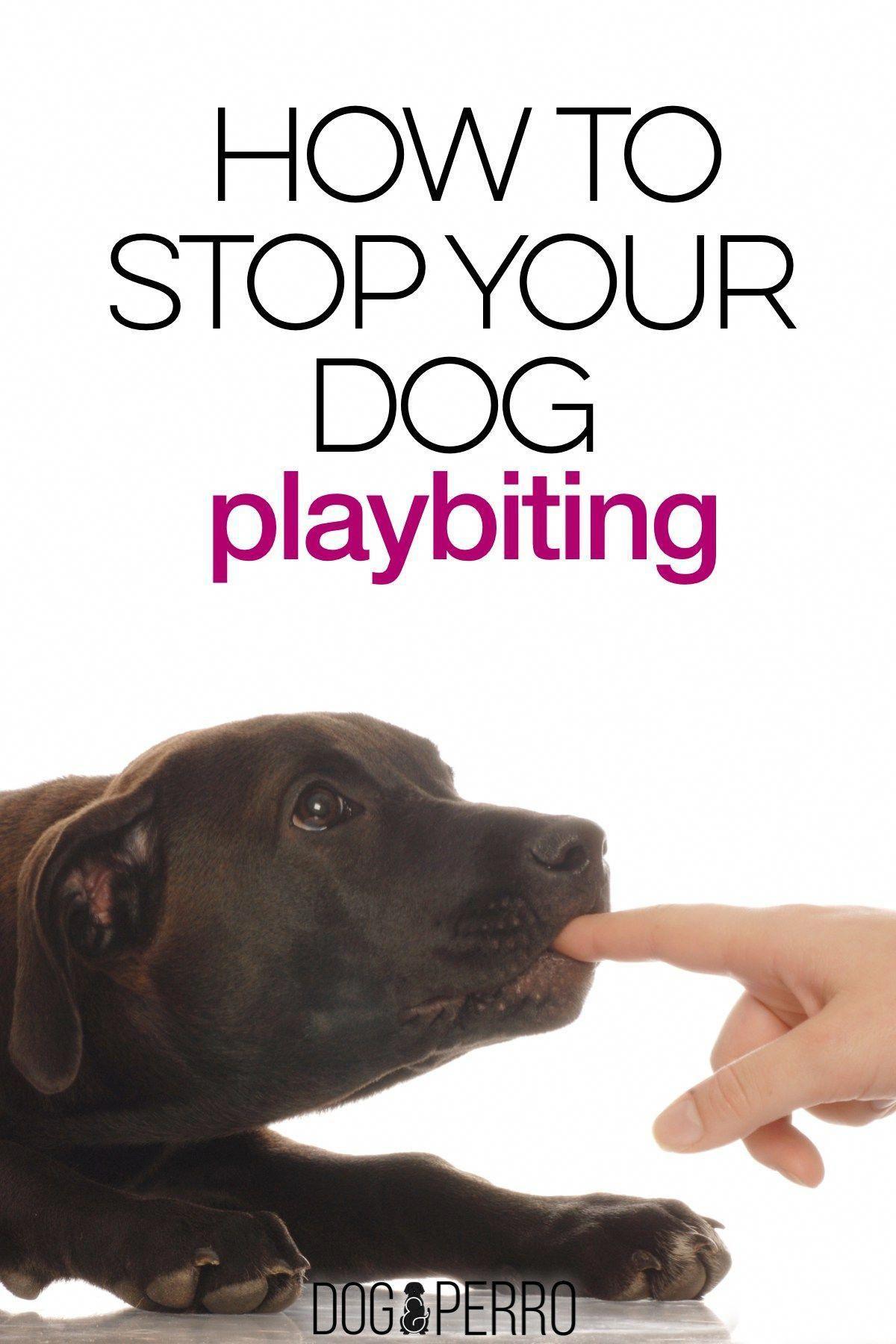 Basic Dog Training Instructions Dogtrainingmyluv 9707202538