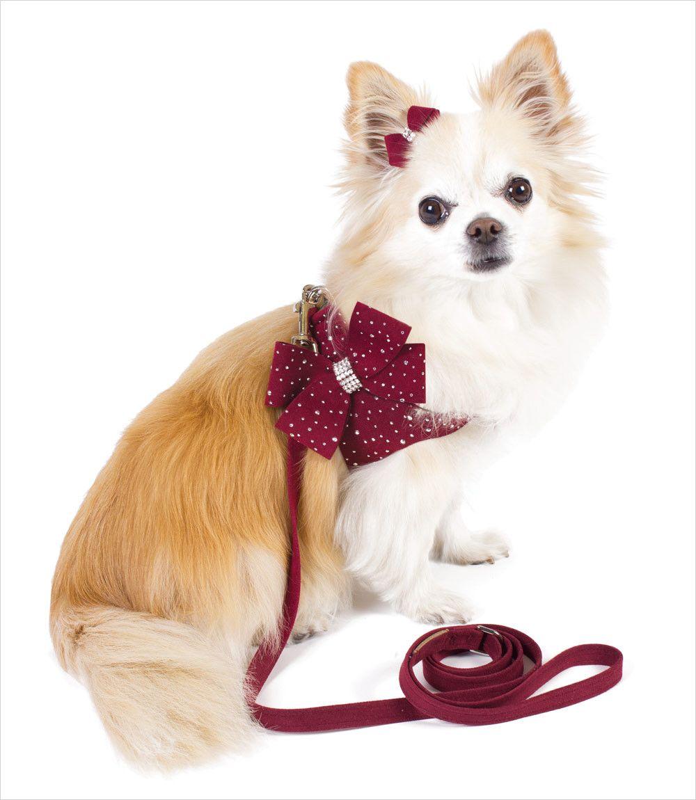 f802d61d0dbf8df97b3307af6ce5558e burgundy harness and leash for peach wedding pinterest