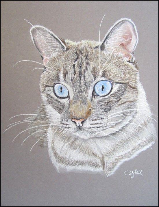 Le blog animalier : Portraits d'animaux | Aquarelle chat ...