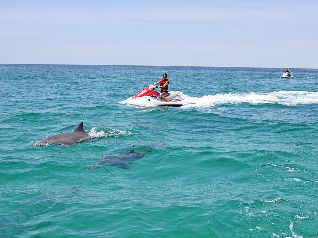Jet ski rental orlando dolphin tours top vacation spots