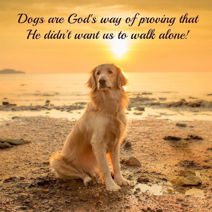 Dogs Are God S Way Of Proving That He Didn T Want Us To Walk Alone Dog Quotes Dogs Dog Training