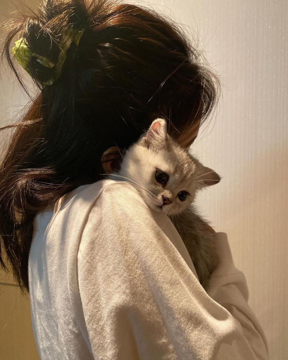 Account Suspended In 2020 Animals Cute Animals Cat Aesthetic