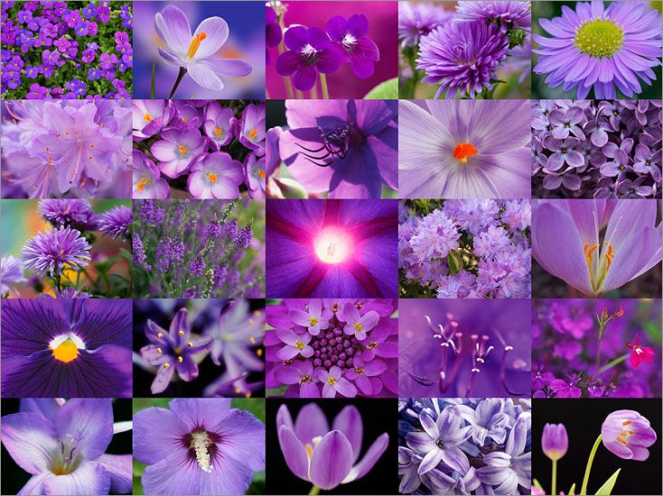 Image result for lavender purple montage