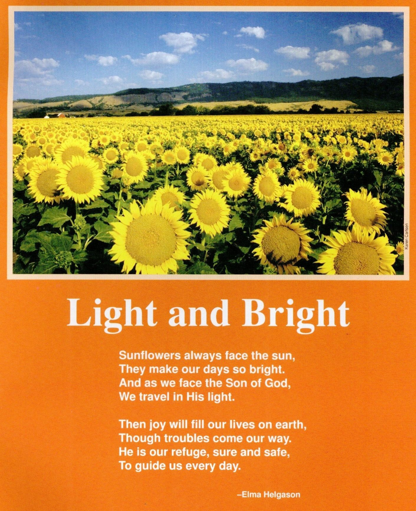 Poem About Sunflowers Facing The Sun By Elma Helgason Ci Nature