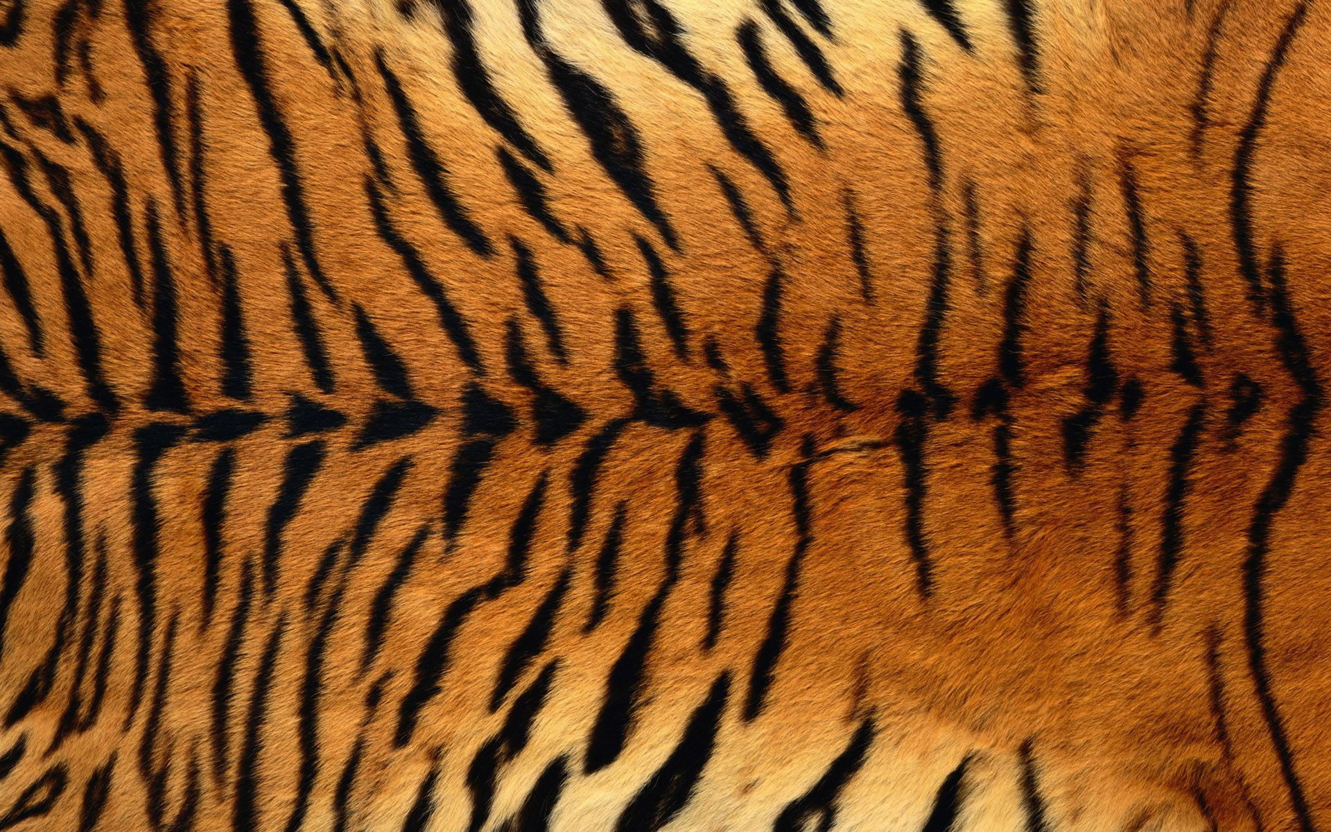 Tiger Pattern Magnificent Inspiration Design