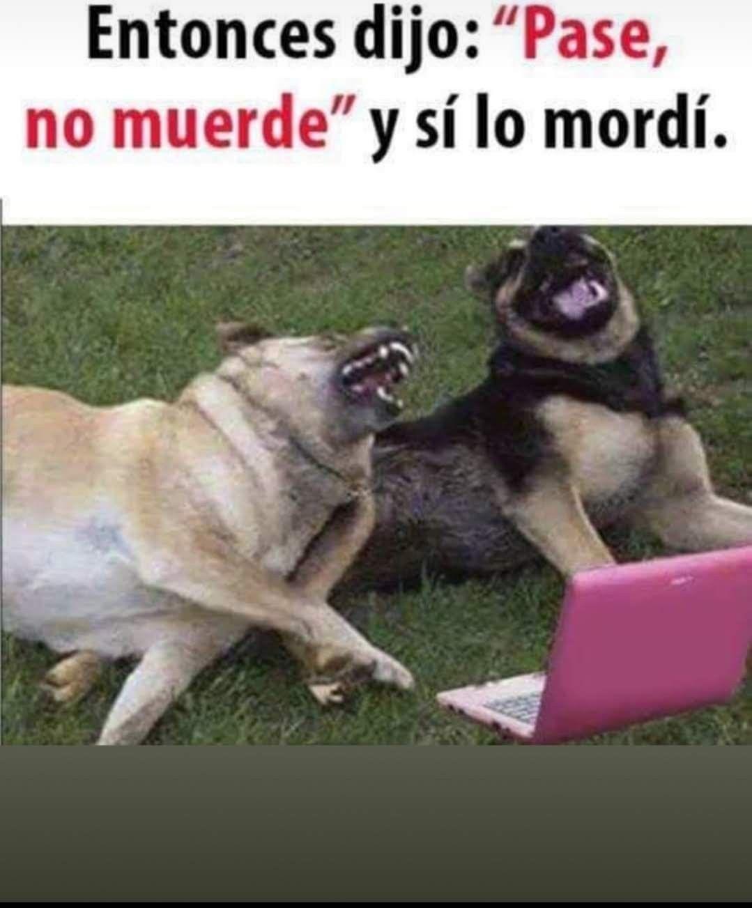 Pin De Madame Red En Memes Humor De Perros Chistes De Perros Memes Divertidos Sobre Perros