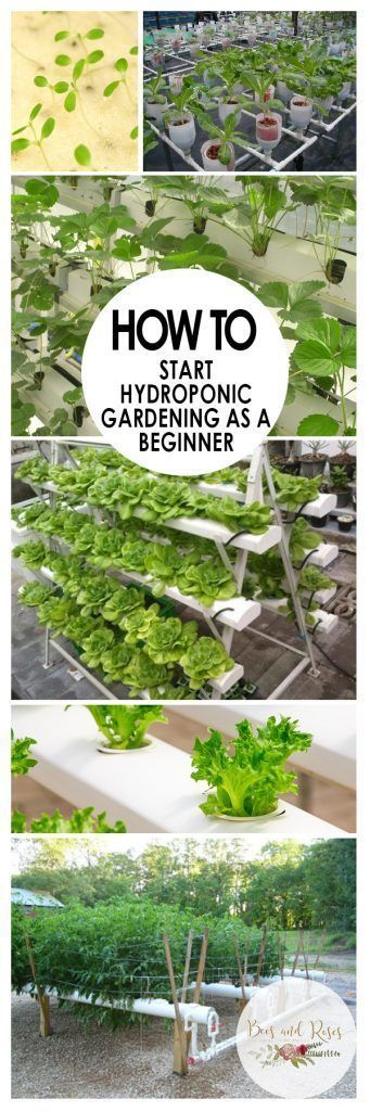 How To Start Hydroponic Gardening As A Beginner Bees And Roses Hydroponics Hydroponics Diy Indoor Vegetable Gardening