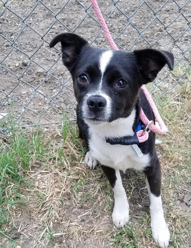 Adopt Puffin on Dog love, Dog pictures, Adoption