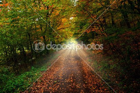 숲의 경로 — 스톡 이미지 #36934317