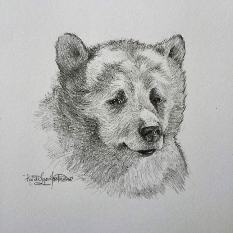 Bill murrays baloo from the 2016 jungle book a pencil sketch by randi lynn jackson