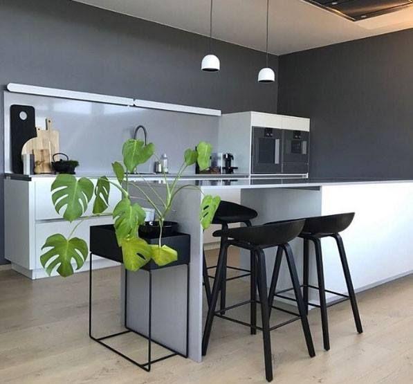 Cuisine très design noir gris et blanche avec une plante pour amener