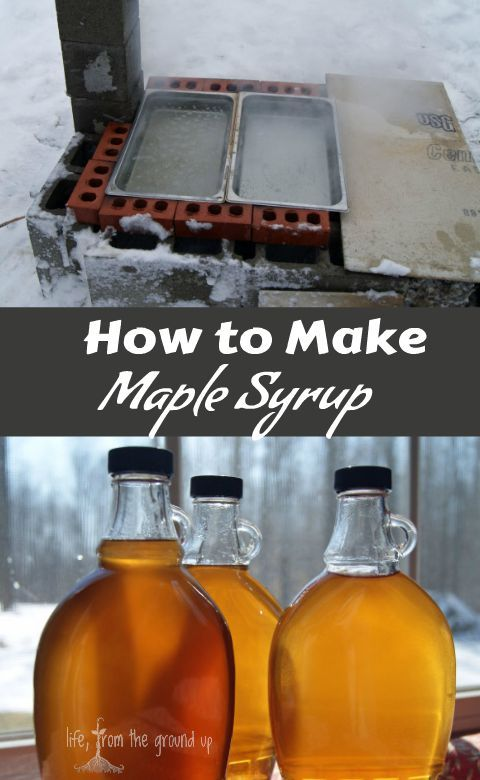 How to make maple syrup maple syrup syrup and sugaring learn how to make your own maple syrup and skip the artificially flavored sugar water ccuart Image collections