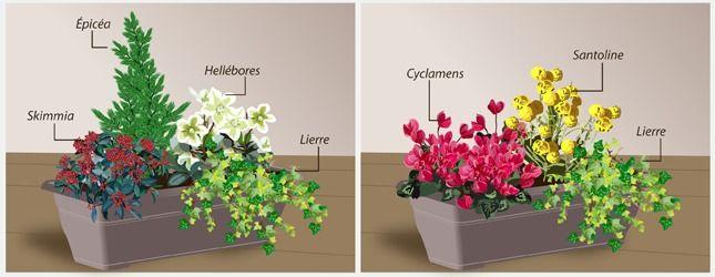 Fiche pratique composer une jardini re d 39 hiver hivernal jardini res et exemple - Idee composition jardiniere exterieure ...