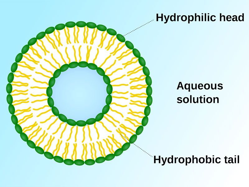 Liposomes Liposomal Encapsulated Technology L Unico Laboratory Biology Magnetic Resonance Imaging Proof Of Concept