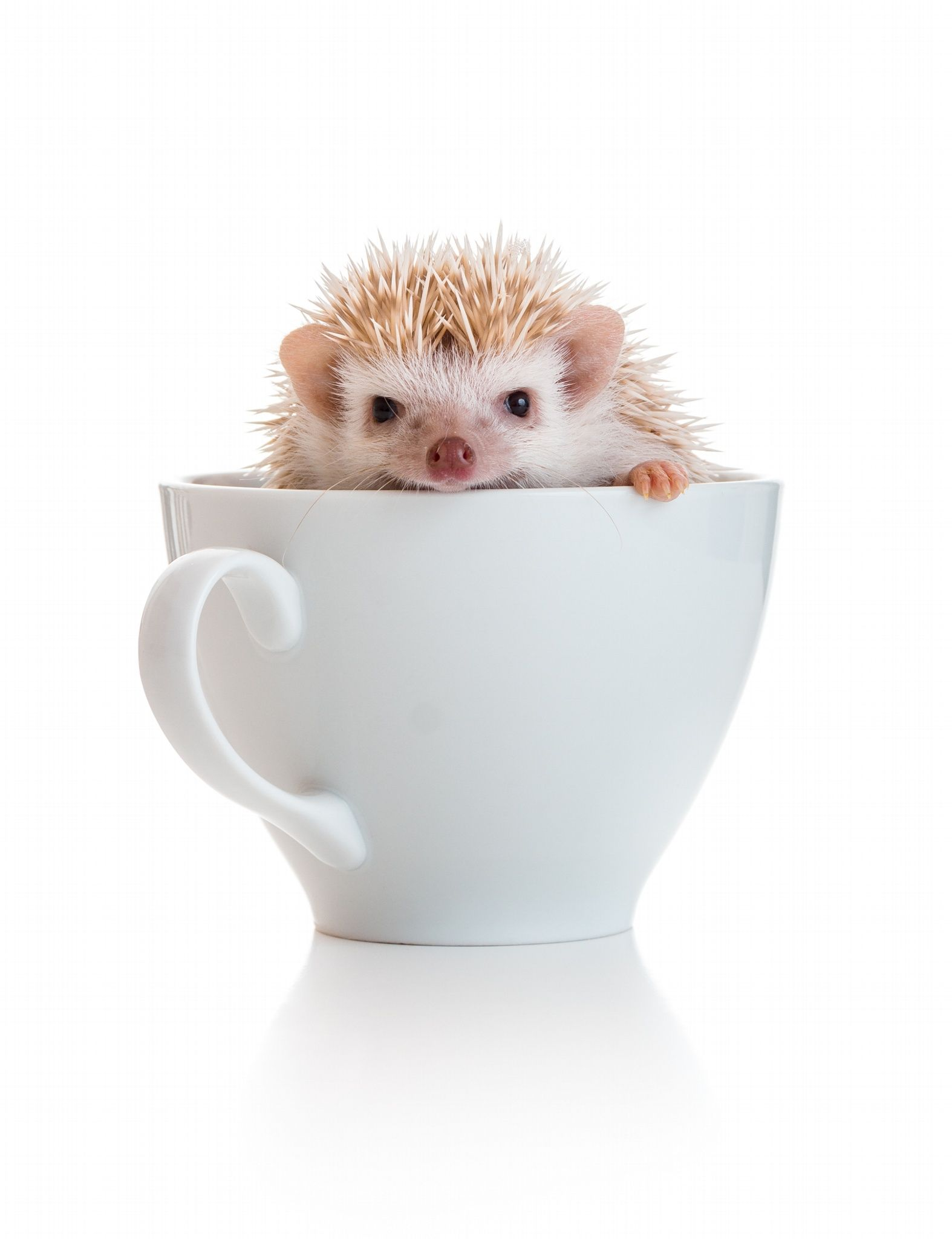 Photo Liam Neeson The Pygmy Hedgehog by Aron  Durkin on 500px