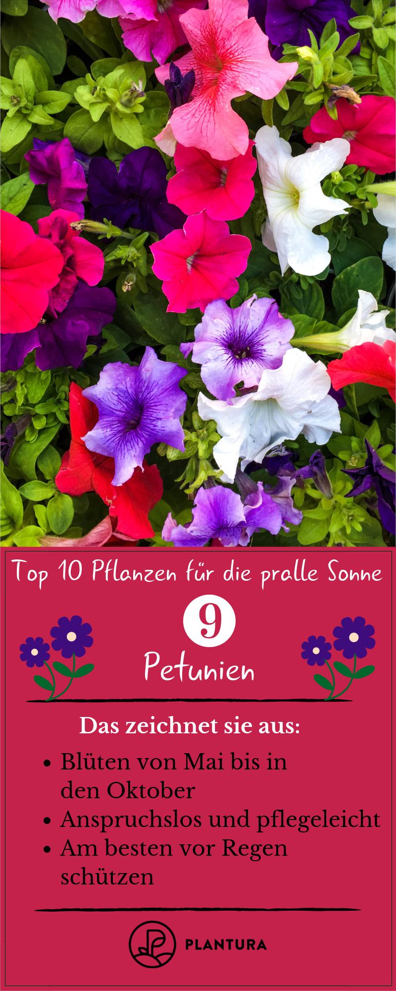 Pflanzen für die pralle Sonne: Die Top 10 für Garten & Balkon - Plantura