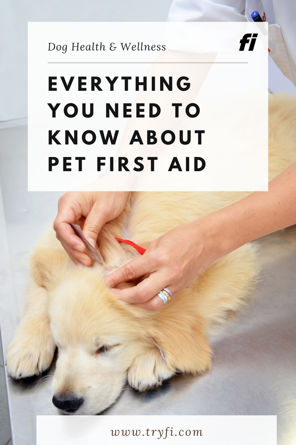 Everything You Need To Know About Pet First Aid In 2020 Pet