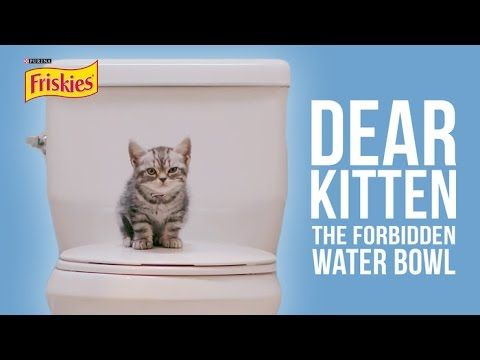 Dear Kitten The Forbidden Water Bowl We Love Cats And Kittens Funny Animal Videos Cats And Kittens Funny Cat Videos